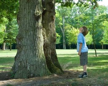 boy-looking-up-tree-anw2h8.jpg